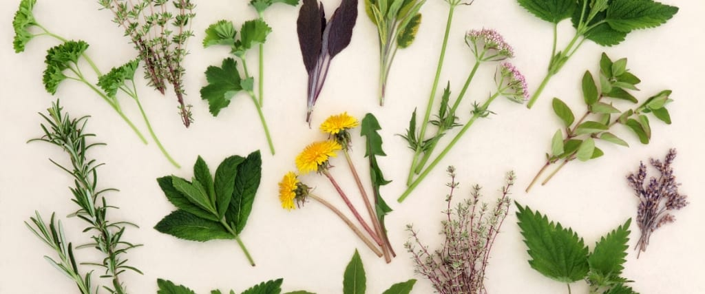 Local Herbals a Two Part Series: Introduction to Local Herbals & Starting a Medicinal Herb Garden