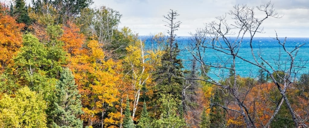 Restore Lake Superior's Coastal Forest